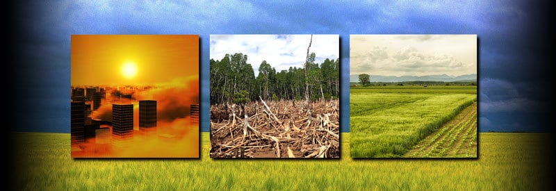 The Effects Of Deforestation And Other Human Activities On Local Weather