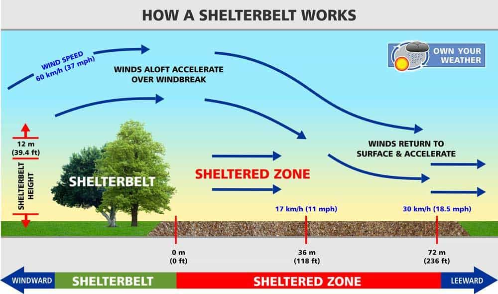 How A Shelterbelt Works